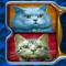 Koty niebieski i biały