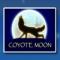 Kojot (wild)